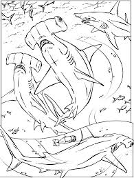 Small Picture Awesome Coloring Pages Sharks Printable Ideas Printable Coloring