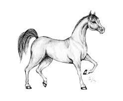 Disegni Da Colorare Di Cavalli Arabi Fredrotgans