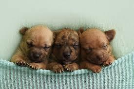 newborn baby pugs for sale. Unique Sale 11 Sixteen Photography With Newborn Baby Pugs For Sale