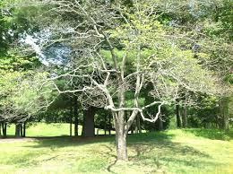 tree and shrub diseases arbortech