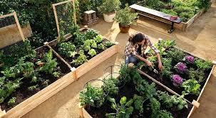 craigslist buffalo farm and garden from your farm food just tastes better when you grow it craigslist buffalo farm and garden