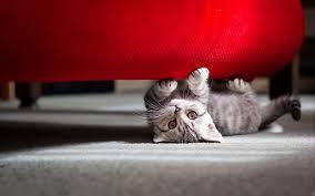 cute cat wallpaper hd picture 32722