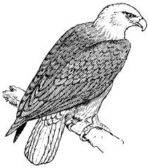 Small Picture Free Printable Bald Eagle Coloring Pages For Kids Throughout esonme