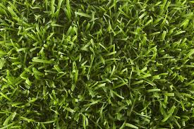 Grass Seed Selector Tool