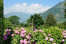 garden flowers. Shalimar Bagh: Garden -Flowers Flowers