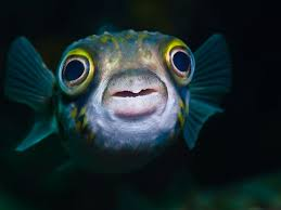 a picture of a fish