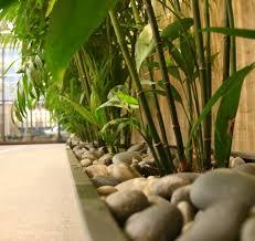 office feng shui plants. Reception - Plants In Feng Shui Office T