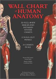 Wall Chart Of Human Anatomy 3d Full Body Images And Detailed System Charts Hardcover