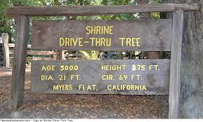 shrine drive thru tree sign