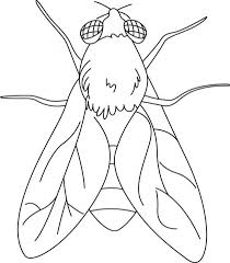 Small Picture 87 best Insects Coloring Pages images on Pinterest Coloring