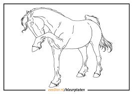 Kleurplaten Paarden Fries Brekelmansadviesgroep