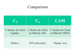 Journal Explain The Relationship Between Photosynthesis And