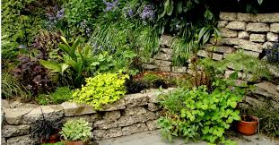 black plastic sheeting for gardens photo of summer gardening tips to keep your plants fresh amp