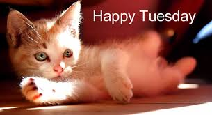 Image result for tuesday cat images