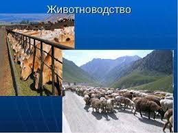 Почему и как животноводство вредит экологии Статьи об экологии  Реферат тема экологические проблемы животноводства