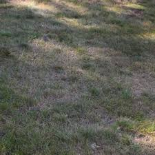 photo of trugreen lawn care windsor ct united states trugreen contaminated lawn