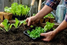 garden helper project
