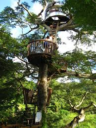 treehouse masters tree houses. Takashi Kobayashi: Tree House Master Treehouse Masters Houses T