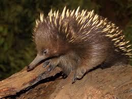 Platypus House - Discover Tasmania