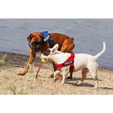 Color Gray Idc Lightweight Belt Dog Harnesses