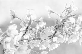 Image result for How to White on White Photography