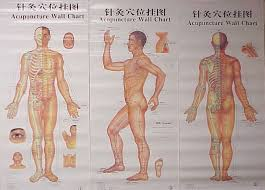 Whole Body Chart Acupuncture Body Chart 3pcs