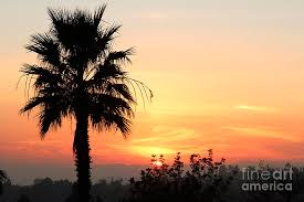 sky photograph sunset with palm tree silhouette by nina prommer