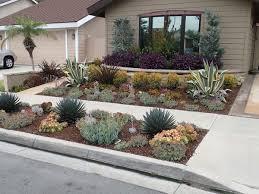 drought resistant garden. Drought Resistant Plants Garden