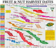 Whats In Season Chart Fruit And Nut Harvest Chart Dave Wilson Nursery