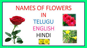 names of flowers in telugu english