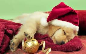 cute merry christmas wallpaper dogs. Simple Dogs Christmas Dog Photos  Sky HD Wallpaper With Cute Merry Dogs Cave