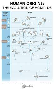 Earth Evolution Chart Chart The Evolution Of Hominids Human Evolution
