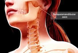 Image result for Temporomandibular Joint