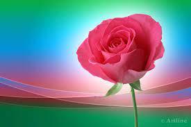 Beautiful Pink Rose Wallpaper Hd 3d ...