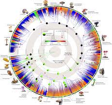 Megaphylogeny Resolves Global Patterns Of Mushroom Evolution