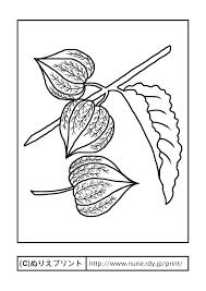 ホオズキ主線黒夏の花無料塗り絵イラストぬりえプリント
