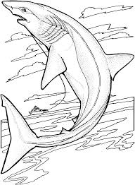 Small Picture Shark Outline Coloring Coloring Pages
