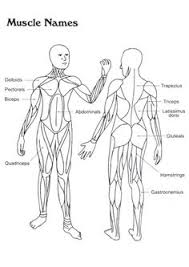 Small Picture coloring page Human body Human body Homeschooling Human Body