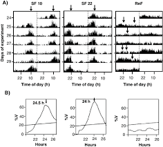 Goldfish Feeding Chart A Double Actograms Of Locomotor Activity From Goldfish