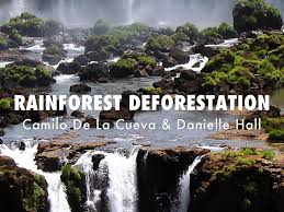 rainforest deforestation speech  rainforest deforestation speech
