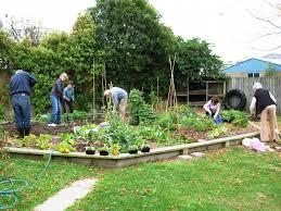community gardening. Redcliffs Community Garden Gardening