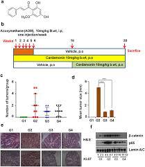 Cardamonin Inhibits Colonic Neoplasia Through Modulation Of