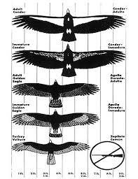 Eagle Comparison Chart The Future Of Eagle Forum