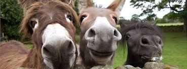 Bildergebnis für funny animals pictures
