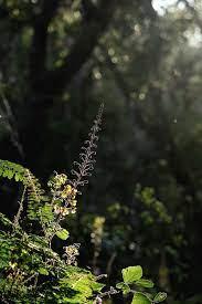 kerala, india, flower, wild, nature ...