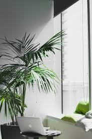 Wonderful The Best Trees (and Big Plants) To Grow In Your Living Room