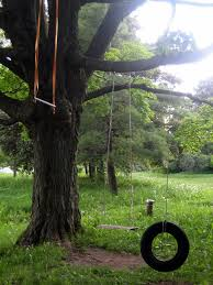 Tree Swings Backyards Fascinating Backyard Tree Swings Backyard Sets