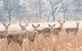 Minnesota Deer Hunt Forecast By Region Brainerd Dispatch
