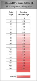 Akaal Pet Hospital Cat Age Chart Im Pretty Sure This