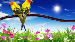 Parrot wallpaper, Laptop wallpaper ...